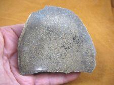 (Df-378-7) 8 oz Fossil Real Dinosaur Bone cabbing slab lapidary I love dinos