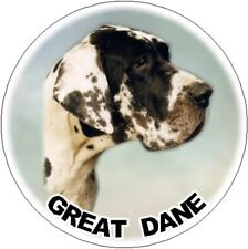 2 Great Dane - Harlequin - Car Stickers By Starprint