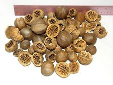 75 REAL HICKORY NUTS FOR CRAFTS FRESH NATURAL WOOD CHRISTMAS FALL THANKSGIVING