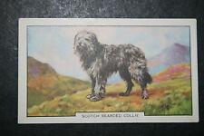Bearded Collie   1930's Original  Vintage Coloured Card # VGC