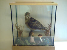 Woodcock in a glass case with a woodland type scenery. an excellent mount.