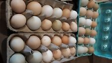 12 silkie hatching eggs. Also frizzle, quail, N.N and Easter eggers