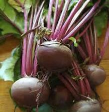 DETROIT BEETROOT 125 SEEDS Beta Vulgaris Heirloom NON-GMO Sweet USA Top Quality