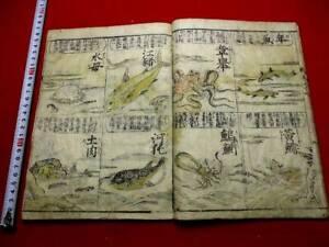 1-10 Japanese fish insect encyclopedia woodblock print BOOK