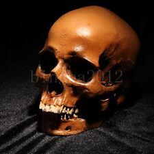 Small Human Skull Replica Resin Model Medical Realistic new size 11X7X8.5cm