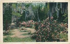 SAVANNAH GA – Bonaventure Azaleas in Bloom - 1930