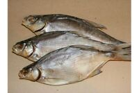 FISH Dried VOBLA Salted Baltic ,,Big River'' Salted for Beer 1 pc
