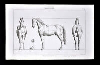 1859 Antique Print Agriculture Farm Horse Proportions Front Side Views by Didot