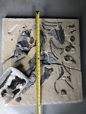 More details for british jurassic fossil ichthyosaur bones lyme regis u.k. collection only #b