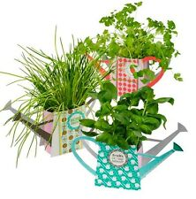 Watering Cans Herb & Plant Holders Gardening Gardeners Novelty Card Gift Set  x3