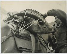 Italia, La morte de la stambecco  Vintage  Tirage argentique  21x27  Circa
