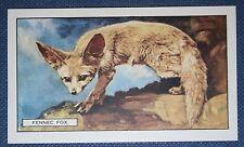 FENNEC FOX    Saharan Desert Fox   Original 1937 Vintage Card   VGC
