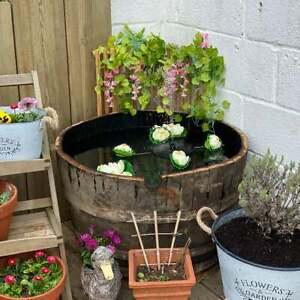 WATERTIGHT OAK BARREL Mini Pond / Lilly Pond / Shrub / Bush Planter / Garden Tub