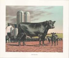 Angus Steer, Farm yard scene! Frame-able print on 8mil vinyl canvas 24 x 20