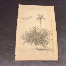 Book Print - Exotic Plants - Calabash Tree & Betel Nut Palm - 1880