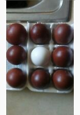 SALE~6+ QUALITY BLACK, BLUE AND SPLASH COPPER MARANS HATCHING *LARGE DARK EGGS *