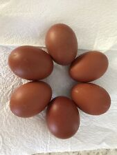 Blue French Maran hatching eggs x 6 From Free range Birds