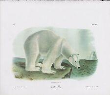 "1989 Vintage /""CINNAMON BEAR/"" FABULOUS WOODS AUDUBON MAMMAL COLOR Art Lithograph"