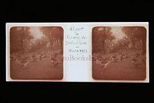 Alger Algérie Jardin d'Essai Plaque de verre stéréo 1924