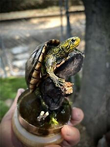 taxidermy mount scorpion mud turtle related snake lizard reptile