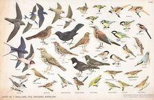 RSPB - Bird Cards - 1960 - N.W.CUSA . Chart N° 1