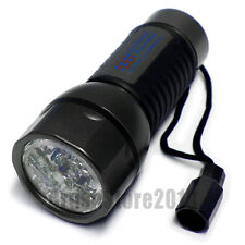 Clow LED Hand Torch with Batteries
