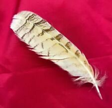 Genuine Owl Feather - Pluma de Buho 25 cm - Ritual, Spell, Witchcrafts