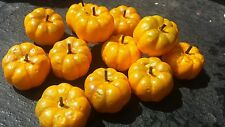20 Artificial Pumpkin Fruits 3.5cm.x 2cm for craft autumn..etc..  UK  SELLER