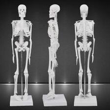 1:4 Human Anatomical Anatomy Skeleton Medical Teaching Model Stand