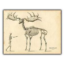 METAL SIGN WALL PLAQUE - GIANT FOSSIL ELK Vintage reprint Anatomy Skeleton