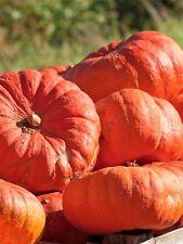Pumpkin Seed: Cinderella's Carriage Pumpkin Seeds Fresh Seed Free Shipping