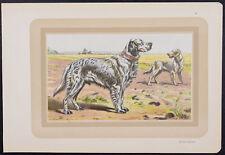 Mahler - Dog - English Setter - 1931 Les Chiens de Chasse Chromolithograph