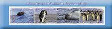 Congo 2017 CTO Wild Animals of Antarctic Penguins Seals 4v M/S Birds Stamps