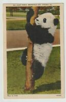 1941 Postmarked Postcard Giant Panda Brookfield Zoo Chicago Illinois IL