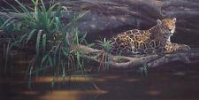 Daniel Smith - Emerald Forest  - Limited Edition - 690
