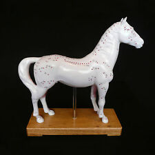 Veterinarian's Horse Equine Acupuncture Model - Anatomical Medical Anatomy