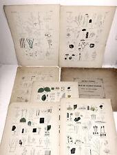 Mykologie. - Pilze. -  Bonorden 12 Litho-Tafeln in Quart 1851