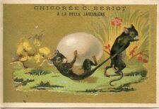 CHROMO // CHICOREE C. BERIOT / A LA BELLE JARDINIERE / / POUSSIN / RAT / SOURIS