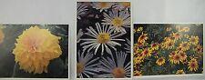 "3 LITHOGRAPHS FALL FLOWERS 5x7"" DAHLIA RUDBECKIA MUMS ART PRINTS"