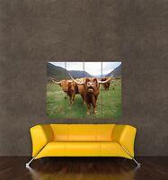 ART PRINT POSTER PHOTO ANIMAL COW LICK CATTLE FARM LFMP0458