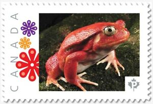 FROG, TOMATO FROG = Picture Postage stamp MNH Canada 2018 [p18-06sn16]