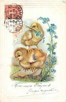 HEUREUSE PÂQUES  - Poussin sur le dos d'un autre poussin et fleurs bleues