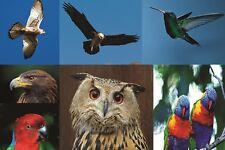 1000 ad Alta Risoluzione Qualità Bird le immagini di grande formato stampante Business vendita
