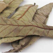 200+Organic Dried Guava Leaves Fresh Green Cut Nature Dried with Tip Stems