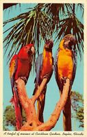 Treeful of Macaw Parrots at Caribbean Gardens, Naples, Vintage 1960s Postcard