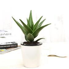 100pcs Aloe Vera Samen ausgezeichnete Zimmerpflanzen Kräutergarten Sukkulenten**