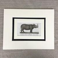 1791 African Rhino Rhinoceros Buffon Natural History Original Antique Engraving