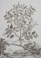 WALL ART PRINT INSPIRED BY ABRAHAM MUNTING MUNTINGS TREE FLOWER 39X54 WHIT