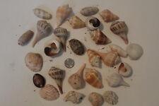 Sea Shells Collection Beautifull Mixed Seashells Bulk Lot - 20-NX