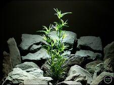 plastic aquarium plant: asparagus bush from ron beck designs. pap206